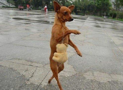 Lady dog !