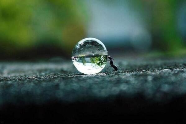 Ant Moving a Water Drop