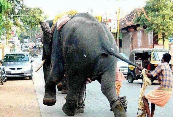 صور مضحكة من #الهند - صورة 3