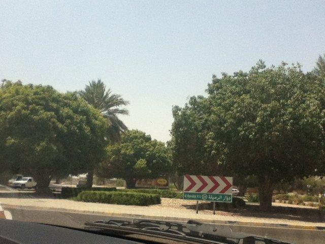 الطريق إلى واحة هيلي في #العين #أبوظبي