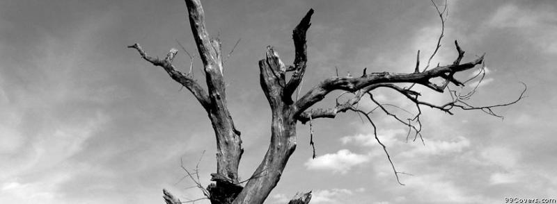 موت شجرة