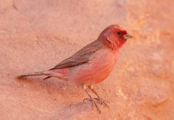 من عصافير #الأغوار #الأردن