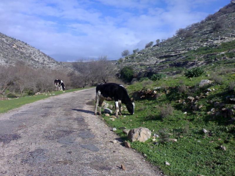 الربيع في #إربد #الأردن