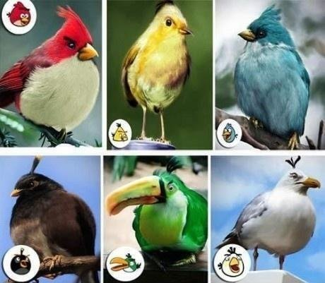 Angry Birds characters are real