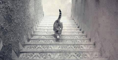 القط طالع ولا نازل