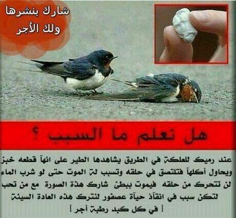 تأثير العلكة - اللبان - الذي ترميه على الطيور