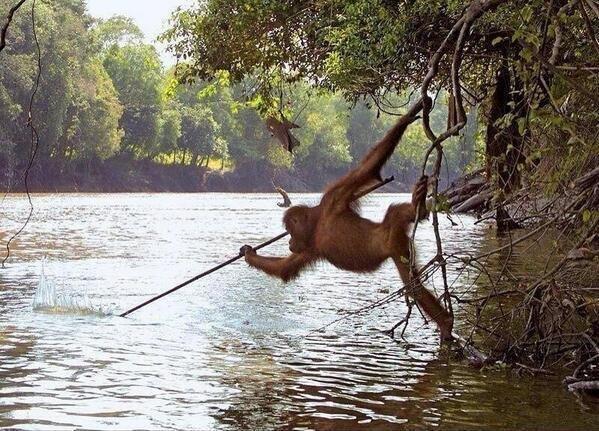 Even Monkeys Learn