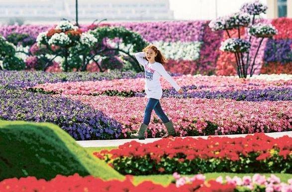 Dubai Miracle Gardens #دبي ميراكل - صورة 10