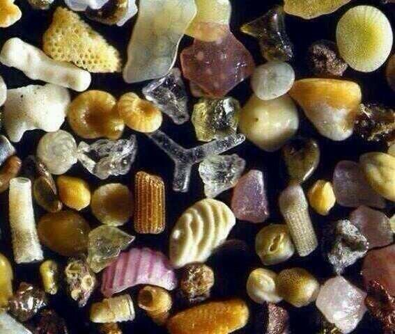 حبات الرمل بعد تكبيرها ٢٥٠ مرة تحت المجهر