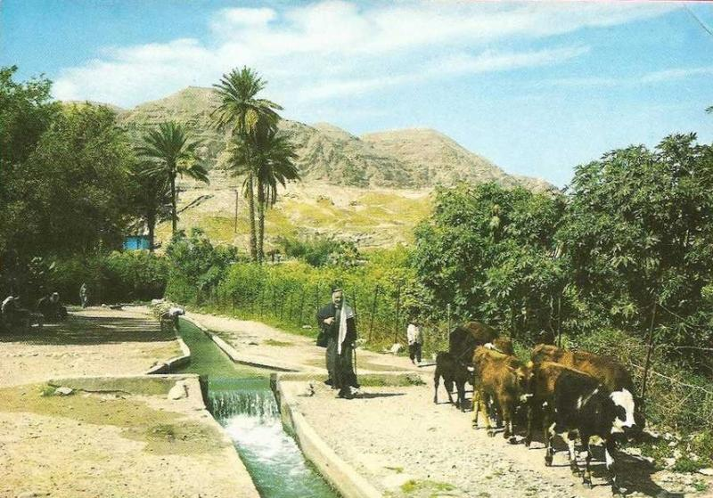 A pastoral scene in Jericho, 1960s