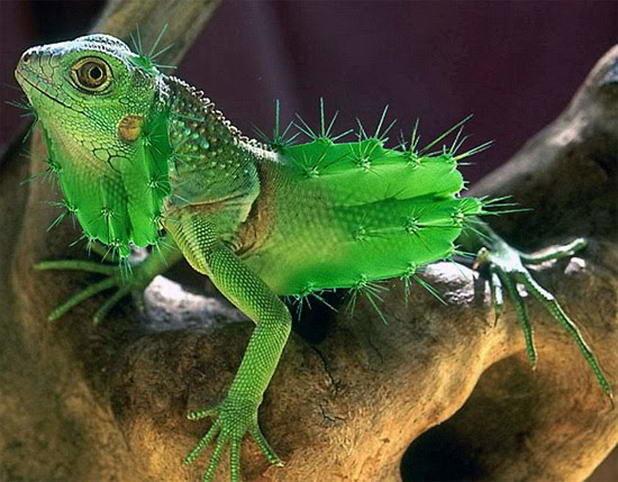 حيوانات معدلة جينيا - Genetically Modified Animals