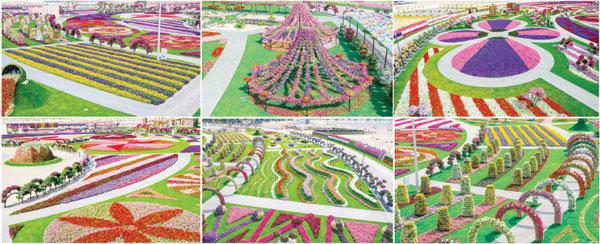 Dubai Miracle Gardens #دبي ميراكل - صورة 20