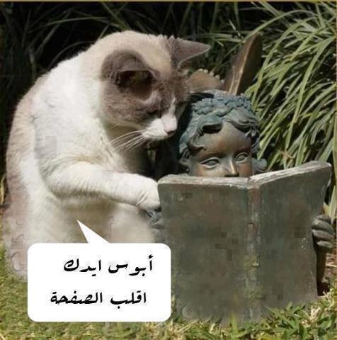 زي اللي مستني حظه يتغير #نهفات