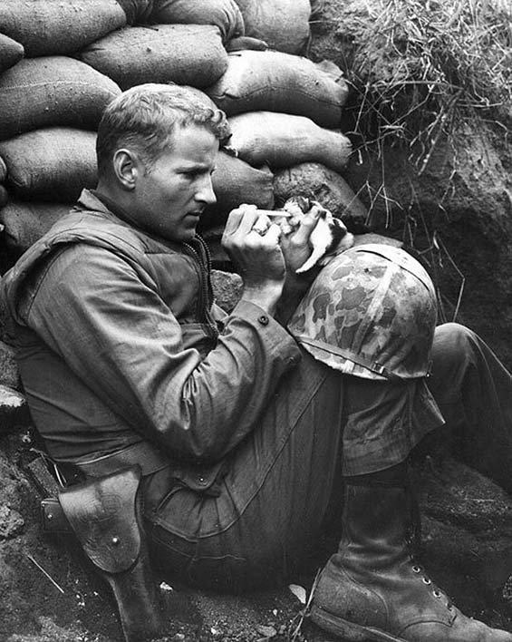 جندي في الحرب العالمية الثانية ترك الحرب وجلس ليطعم قطة #صورة_عالحارك