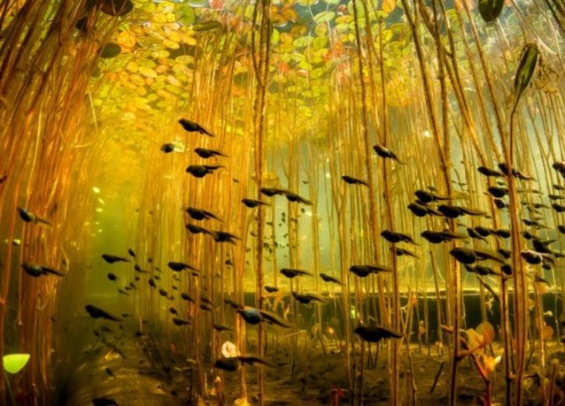 winner of the 2013 DEEP Indonesia international underwater photography competition 3