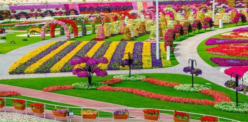 Dubai Miracle Gardens# #دبي ميراكل - صورة 5