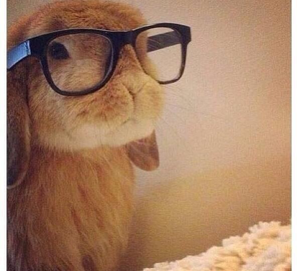 Hipster bunny.