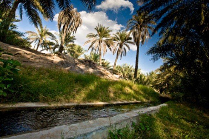 صورة مميزة للأفلاج في #العين #أبوظبي