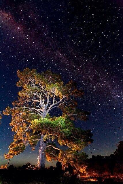 Milky Way over tree, Hill End, Australia