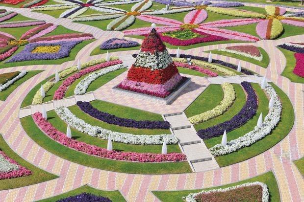 حديقة #العين بارادايس في مدينة #العين #أبوظبي والتي تتكون من 10 مليون زهرة متنوعه