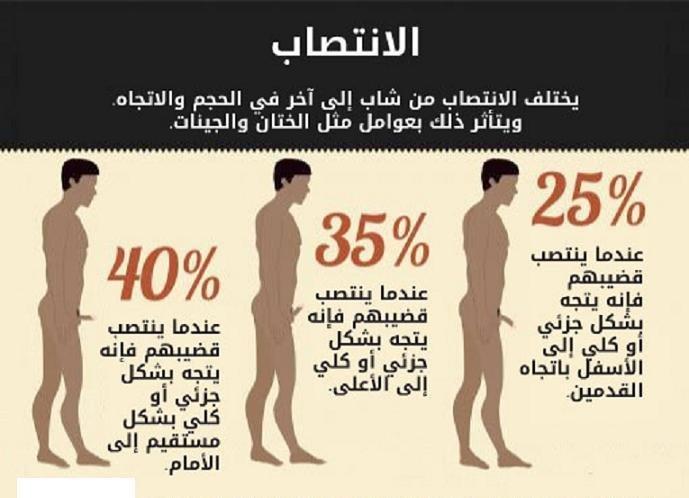 أنواع الانتصاب عند الرجل