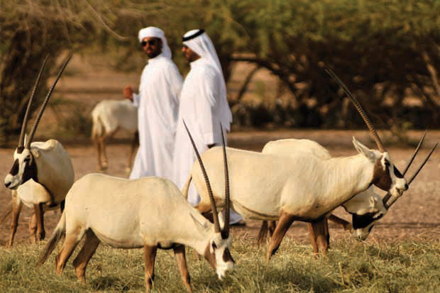 The Arabian Wildlife Park #AbuDhabi