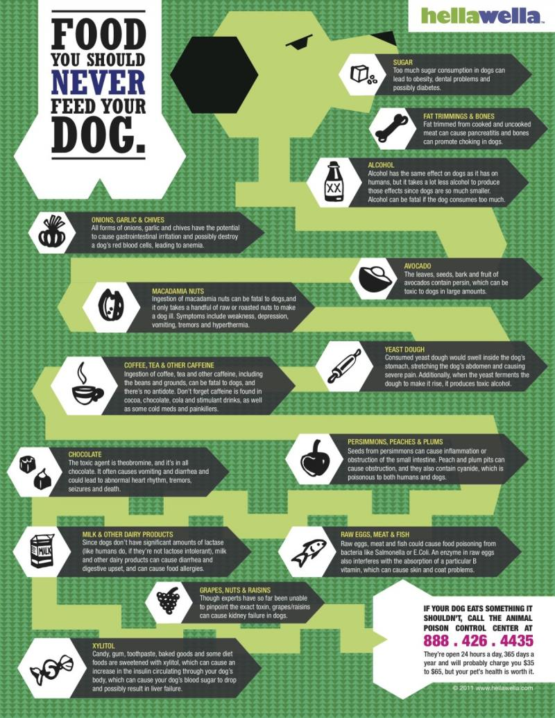 food you should never feed your dog #infographic