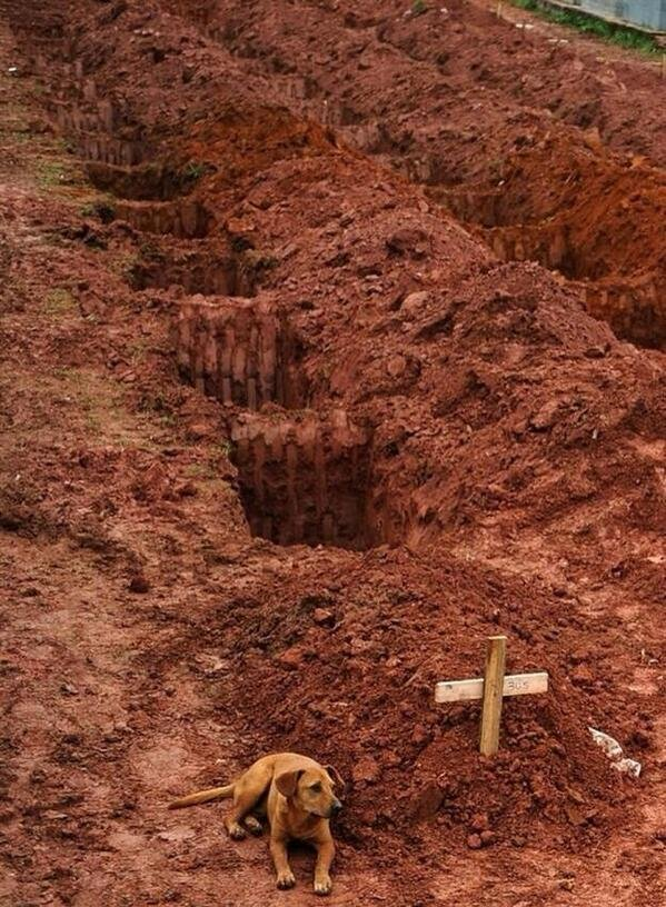 dog named Leao sits everyday at the grave of her owner