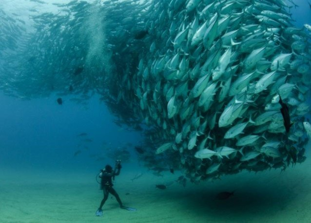 winner of the 2013 DEEP Indonesia international underwater photography competition 5