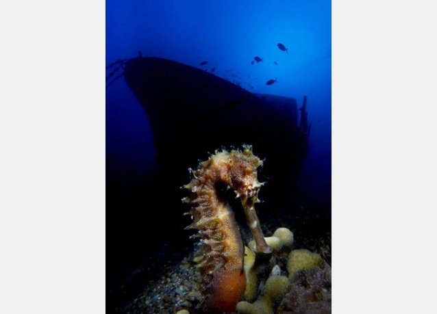 winner of the 2013 DEEP Indonesia international underwater photography competition 9