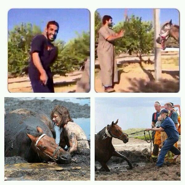 الفرق بين معذبي الحصان وبين الغرب. ليس الأمر مضحكا