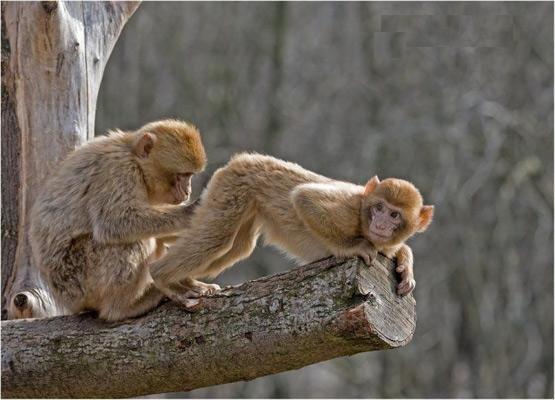 Monkey Butt Inspector