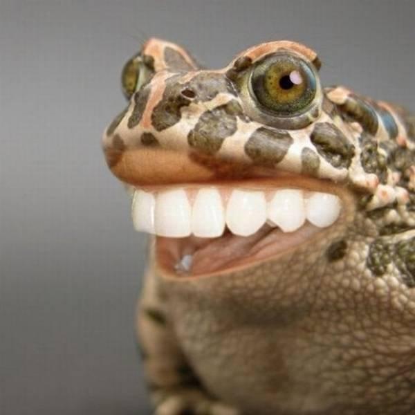 Nice teeth frog