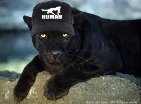 ماركا جديدة للحيوانات فقط