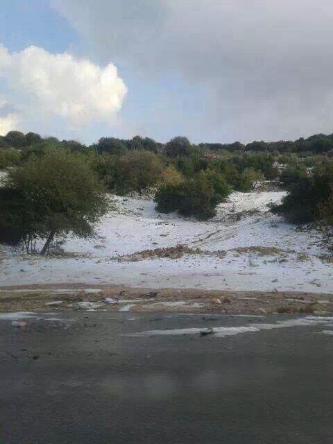 صور تساقط كميات متفرقة من الثلوج في احراش دبين #عجلون #الاردن