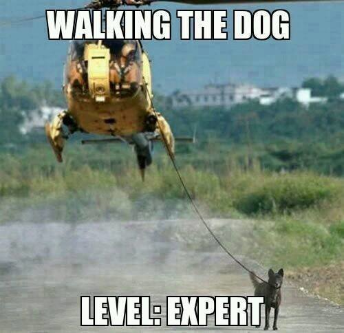 new way of walking the dog