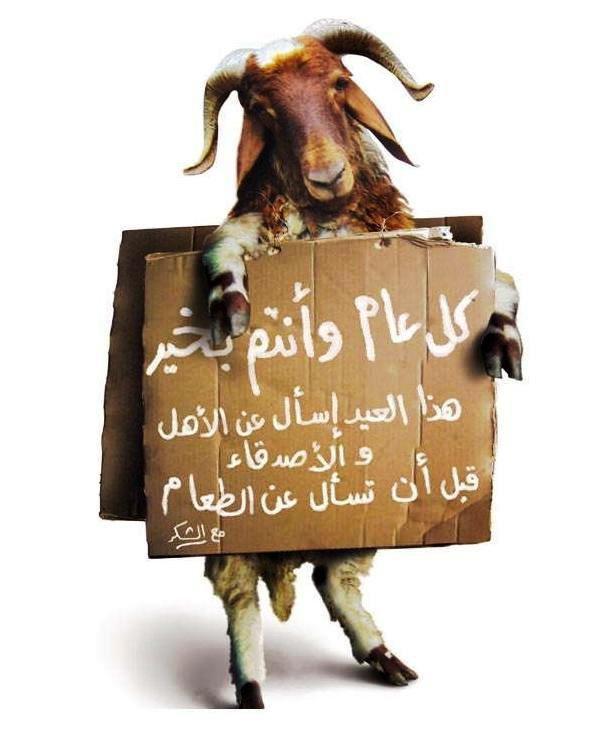 بطاقات تهنئة بعيد الأضحى - خروف العيد