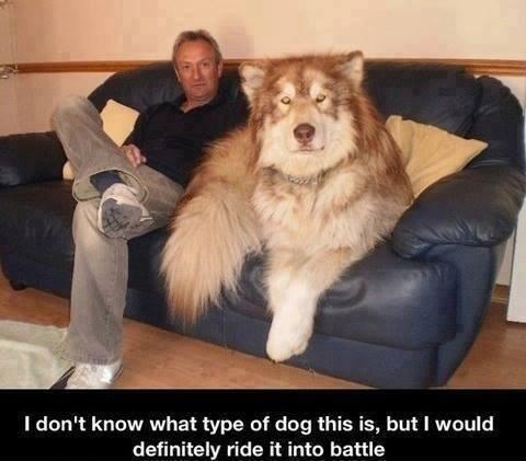 صورة: النسخة الحقيقية من الكلب بل الذي كان مع سيباستيان #معلومات