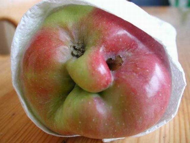 Funny #Apple