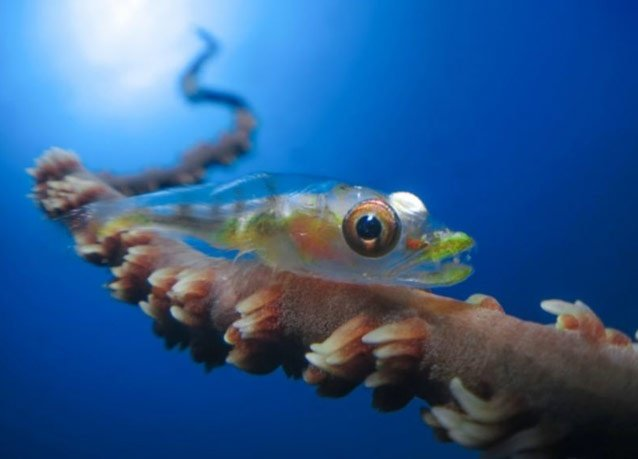 winner of the 2013 DEEP Indonesia international underwater photography competition 11