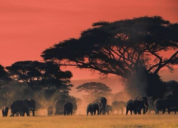 At the end of the day on the plains of Africa