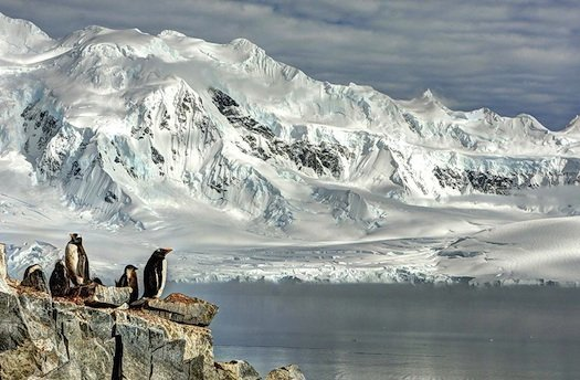 Gento penguins and their newborn chicks at Damoy Point, Antarctica