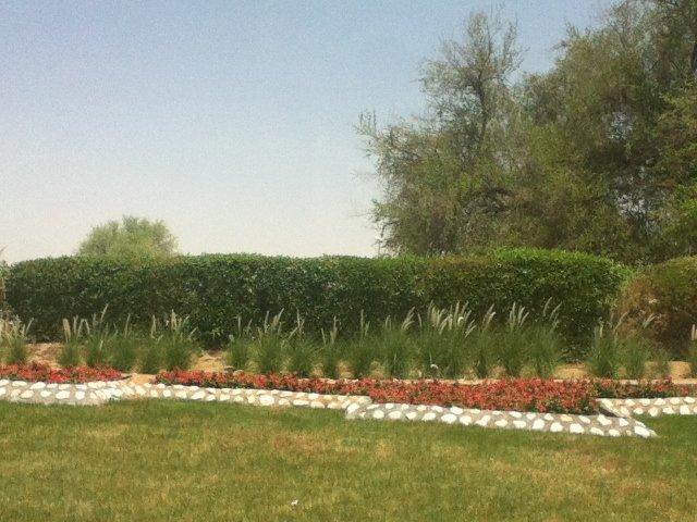 من حدائق #العين - #أبوظبي