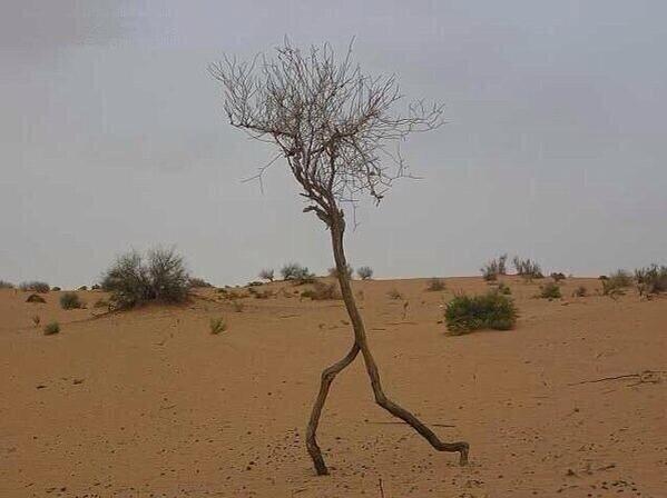 صورة لشجرة كأنها تركض