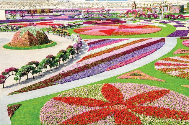 Dubai Miracle Gardens# #دبي ميراكل - صورة 1