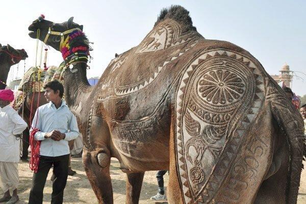 فن الرسم على الجمال في الهند