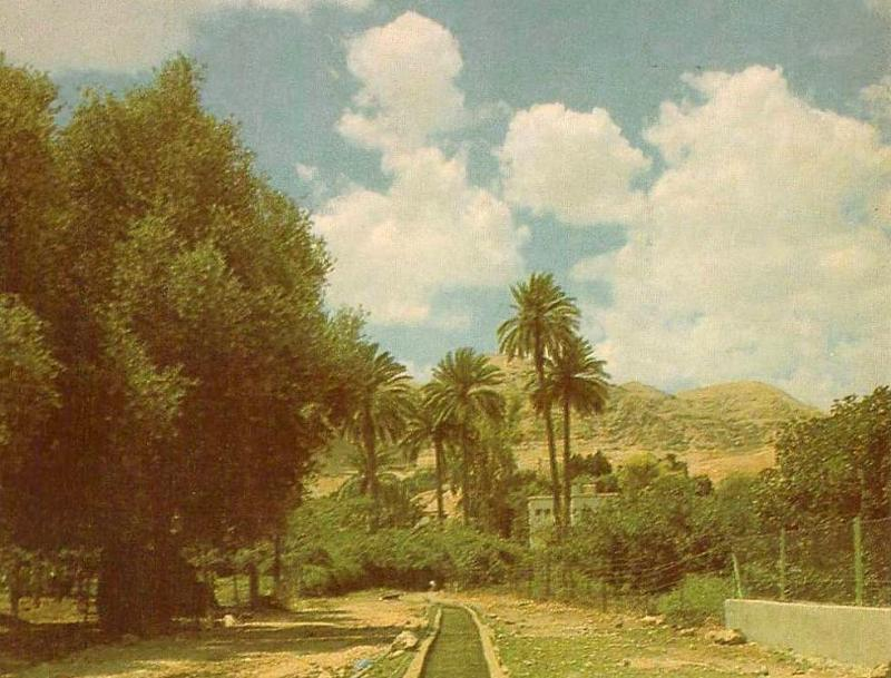 A watering canal, Jericho