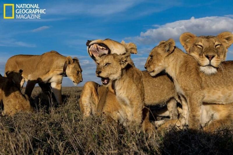 صورة نادرة من ناشونال جيوجرافيك