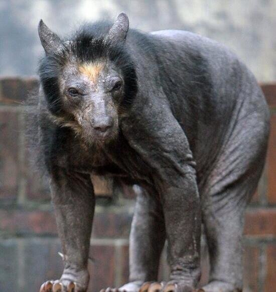 Most animals get funnier when you shave them. Not bears. Bears get more terrifying