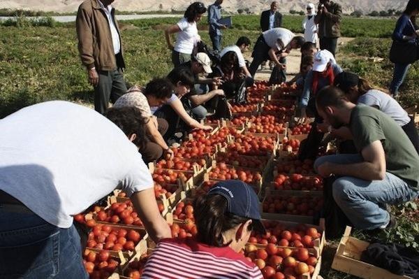 صور منوعة من #الأغوار #الأردن - صورة 5